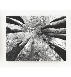 Ashley - Ananya A8000035 Wall Art - Black/White (A8000035)