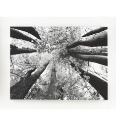 Ashley - Ananya Wall Art - Black/White ( A8000035 )